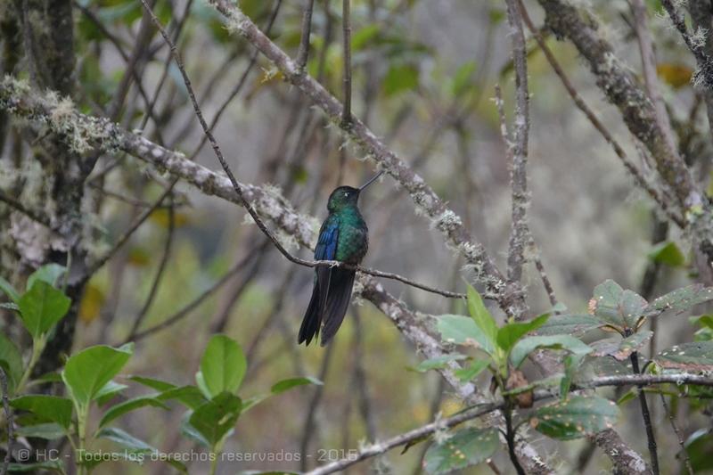 En Termales del Ruiz tambien puedes hacer avistamiento de aves endemicas y casi endemicas de la region alto andina, senderos y diferentes actividades turisticas en la zona